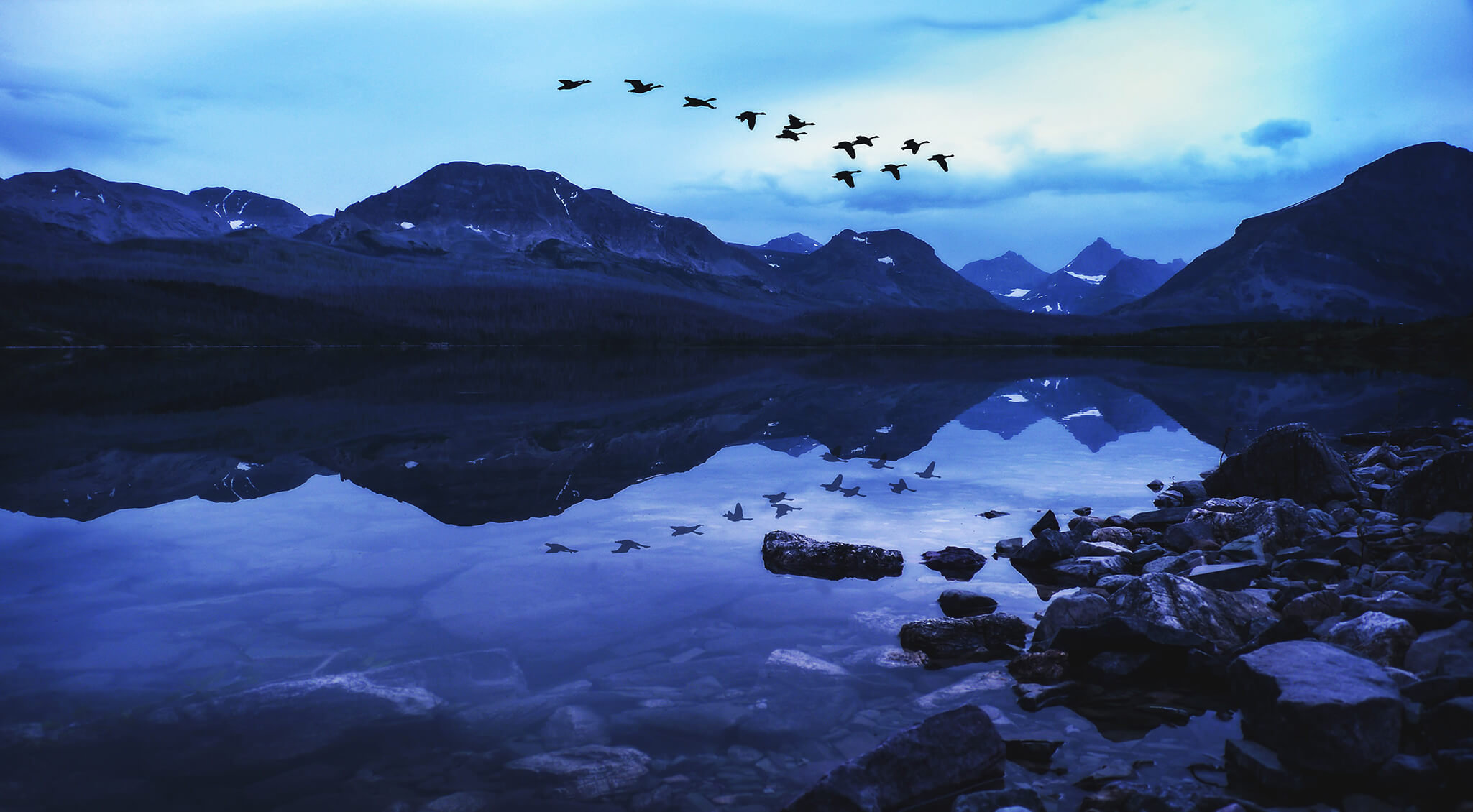 birds flying over the lake